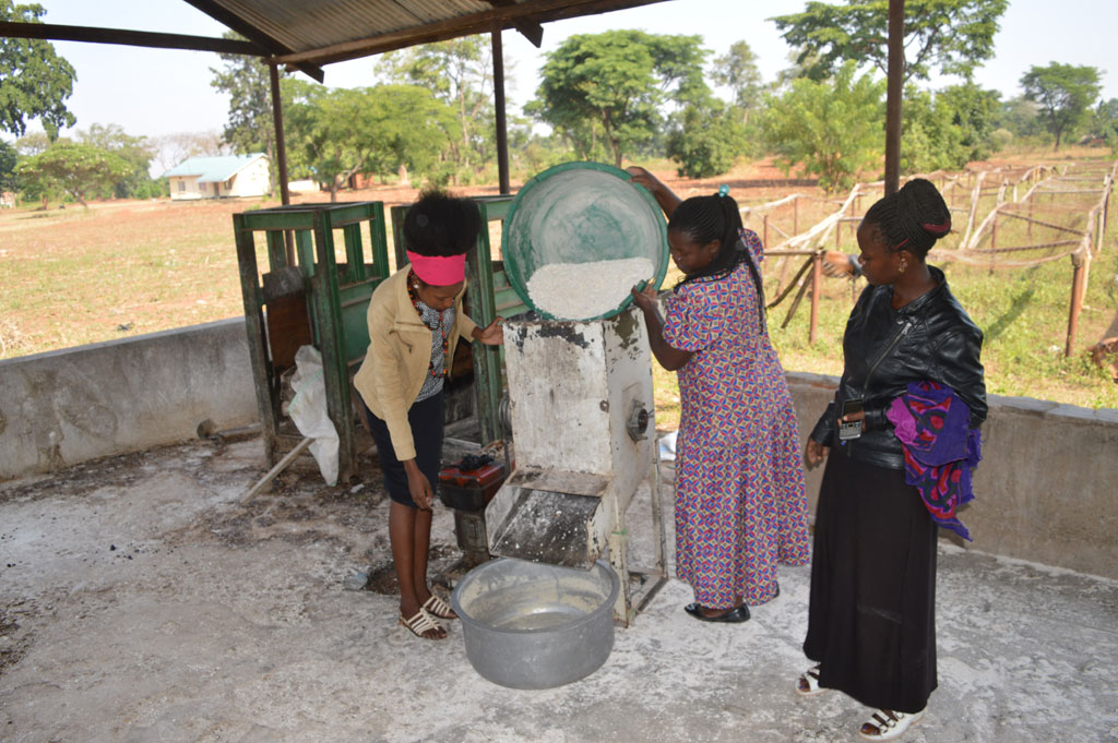 Kibuku women farmers reap big from cassava processing